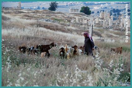 Giordania - Beduini