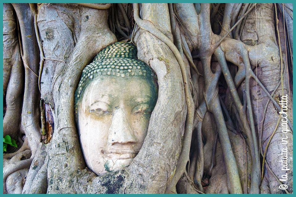 La testa di Buddha tra le radici al Wat Mahathat di Ayutthaya