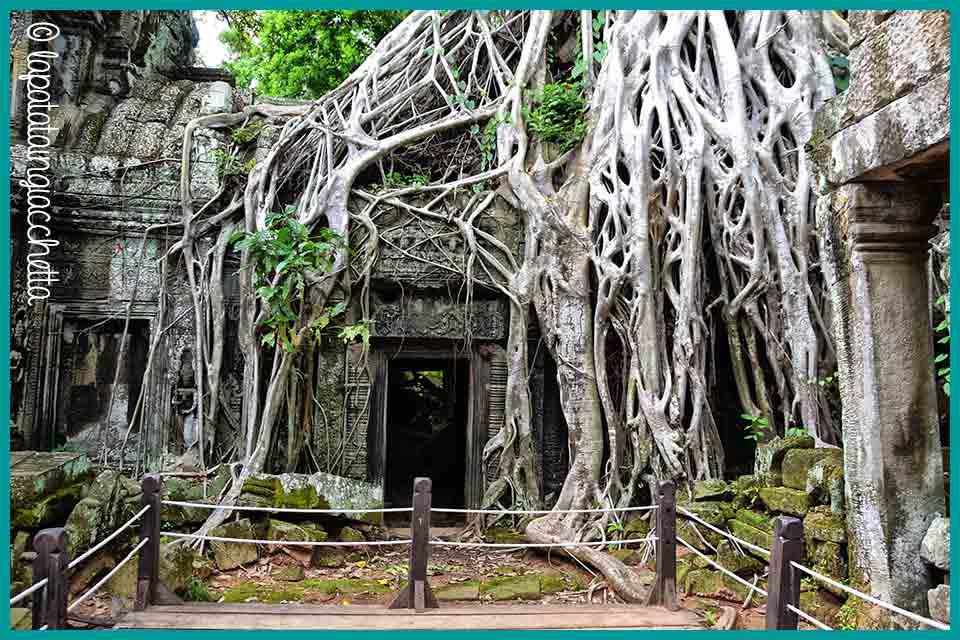guida-rapida-per-visitare-angkor-in-cambogia_ta_prohm