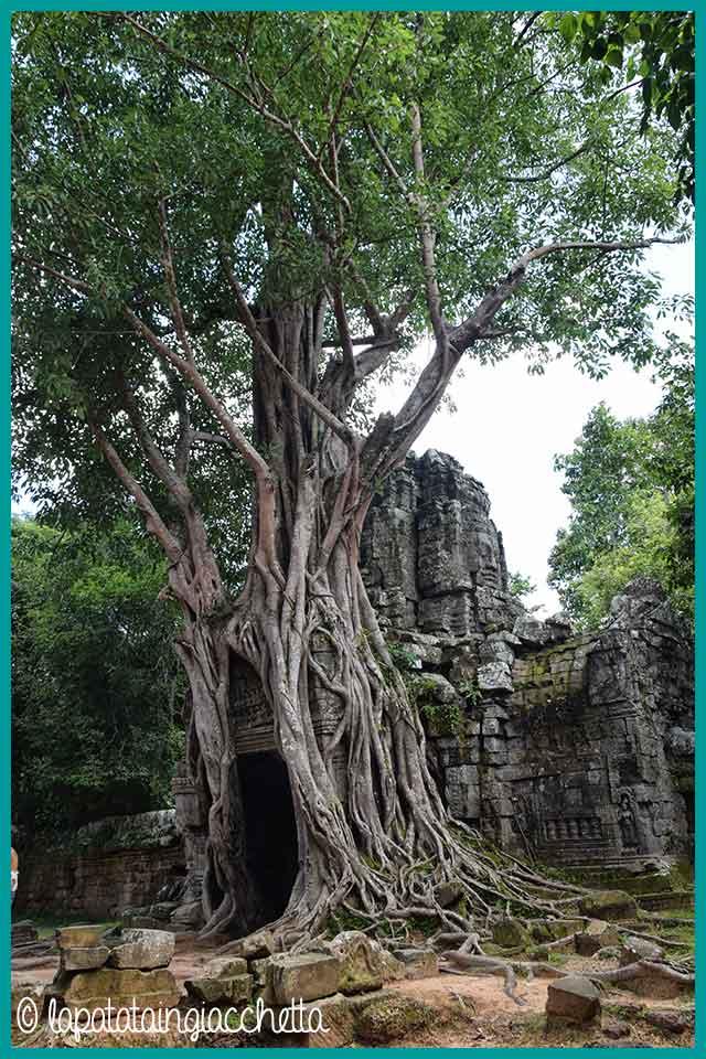 guida-rapida-per-visitare-angkor-in-cambogia_ta_som