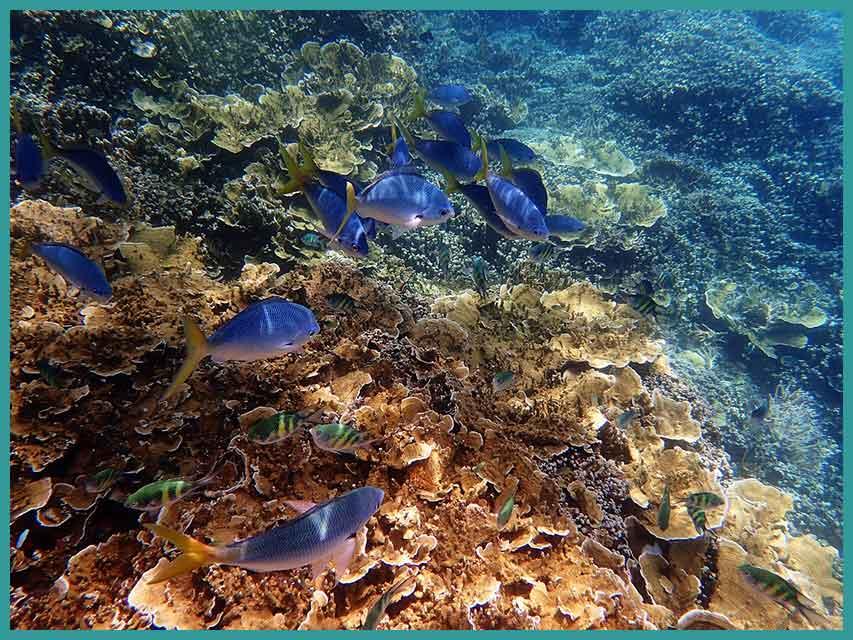Visitare la Grande Barriera Corallina