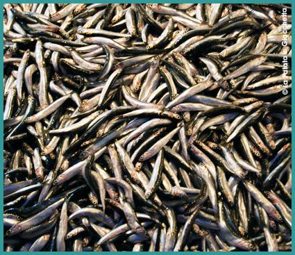 mercato-del-pesce-2